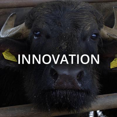 bufala-innovation