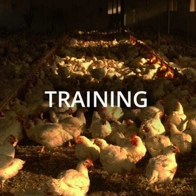 polli-training